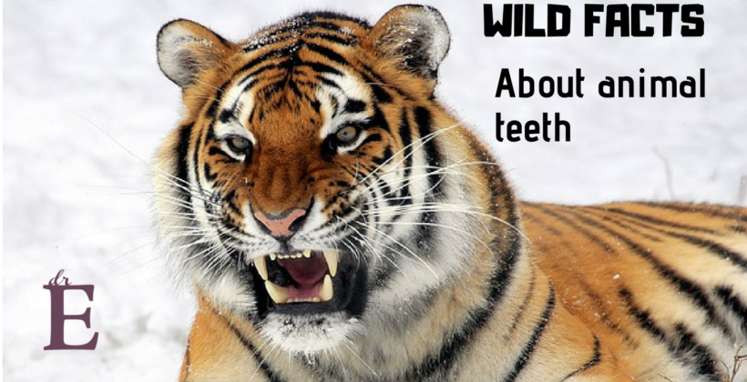 Wild Facts About Animal Teeth
